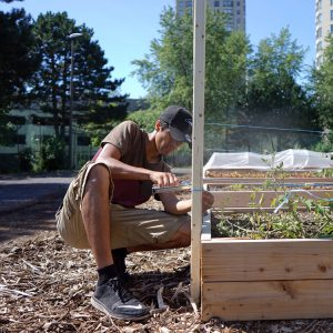 Gardener builds trellis at Gordonridge garden