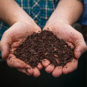 Person holds composts in hands