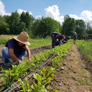 Student farmers tend to crops at an outdoor garden